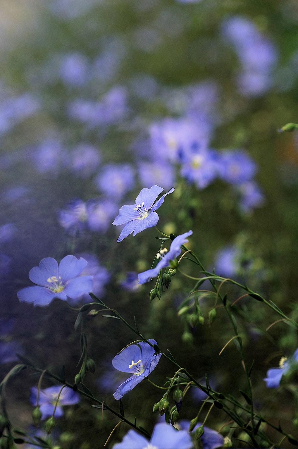 青への憧憬