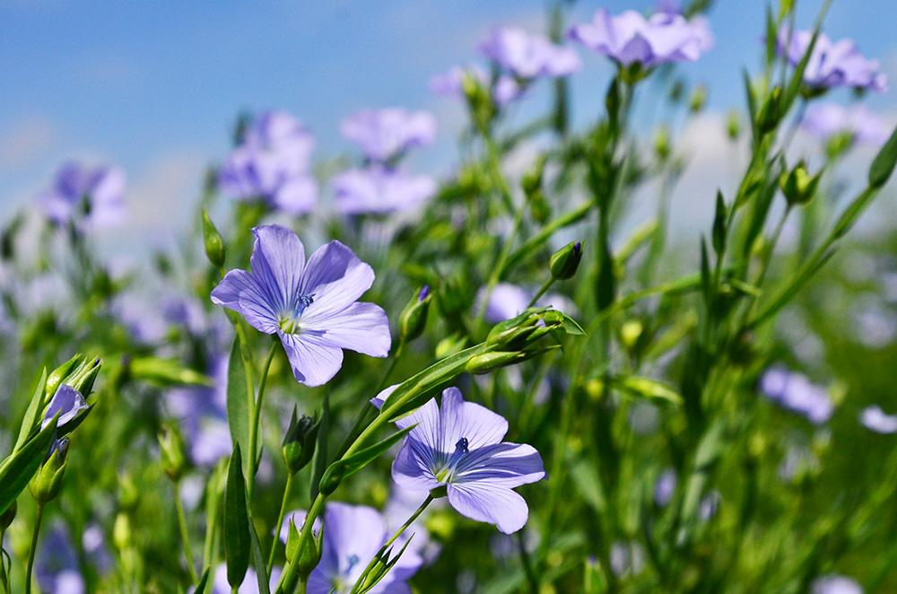 当別町に真夏の花群が。。思わずうっとりです!
