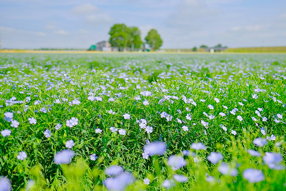 爽夏に咲く